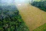 BrazilForestAgIntersection