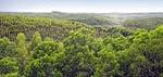 Indo plantation