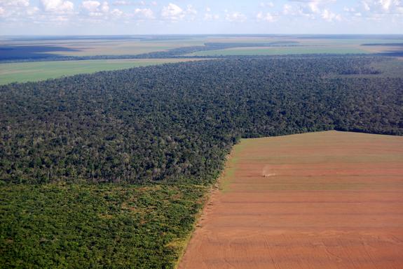 DeforestationBrazil